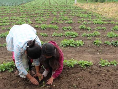 Encuentro virtual gratuito de presentación 3° Diplomado en Agroecología | Miércoles 11 de mayo 2016